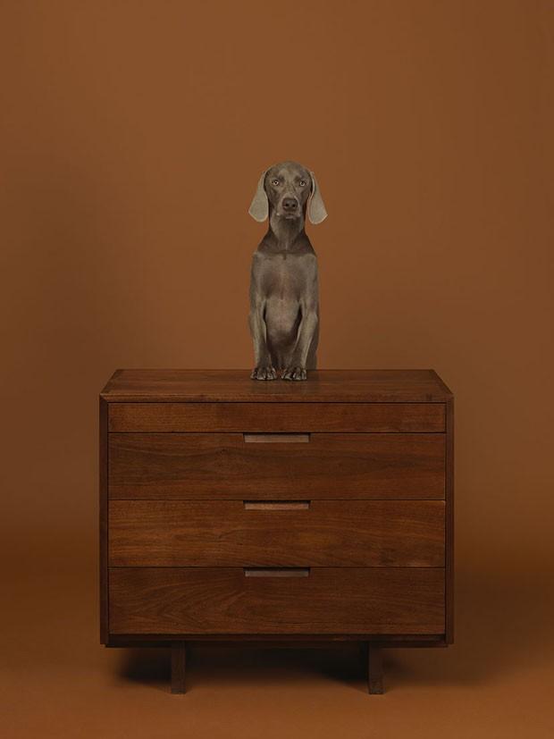 Dogs on Furniture (Foto: © William Wegman/ divulgação)