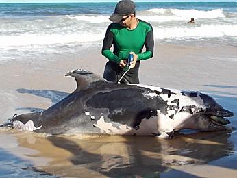 Golfinho ficou preso em armadilha e morreu afogado. (Foto: Arquivo Pessoal/Alexandre Artoni)