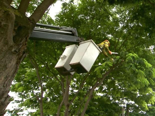 Funcionário faz serviço de poda de árvore em Campinas (Foto  Reprodução    EPTV) 5f2df8fd27a