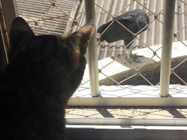 Confira dicas de como criar animais de estimação em apartamento, em Goiânia, Goiás (Foto: Arquivo pessoal/Rayssa Guth)