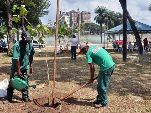 Ipês foram plantados no Parque Solon de Lucena (Foto: Gilberto Firmino/Secom-JP)