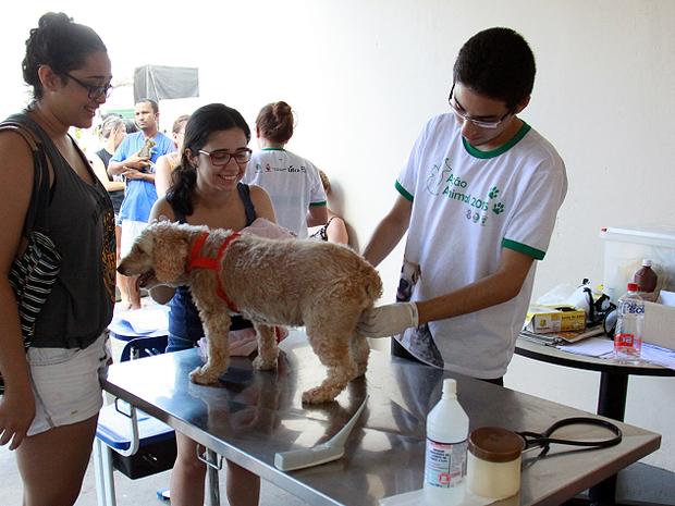 Cães e gatos serão atendidos gratuitamente na Ufra (Foto: Ascom/Ufra)