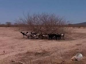 Seca na Bahia  (Foto: Imagens/ Tv Bahia)