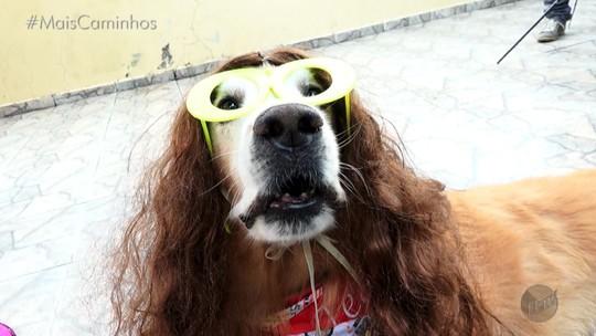 Cachorro faz sucesso com perfil próprio nas redes sociais
