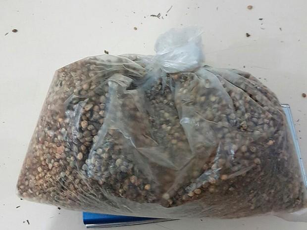 Sementes de maconha encontradas em propriedade no sul da Bahia (Foto: Polícia Civil/ Divulgação)