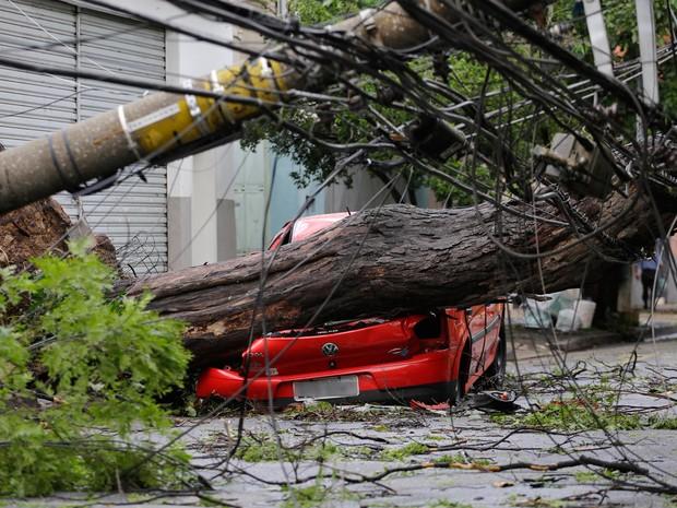 Árvore cai e derruba poste em rua na Zona Oeste de SP (Foto: Nelson Antoine/Framephoto/Estadão Conteúdo)