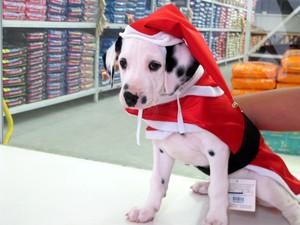 Roupas natalinas para animais de estimação são vendidas em petshop de Santos, SP (Foto: Mariane Rossi/G1)