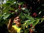 Produtor troca pasto por cafezal e muda de vida no ES