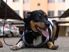 Síndica manda tirar cão de prédio por suposta mordida; dona nega ataque