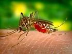 Distrito Federal registra 39 novos casos de dengue em uma semana