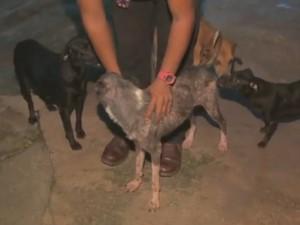 Luiz com cão que foi encontrado caminhando nas cinzas do incêndio em Macapá (Foto: Reprodução/Tv Amapá)