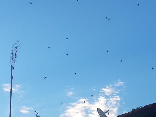 INfestação de aranhas tem preocupado moradores (Foto: Arquivo pessoal/TEM Você)