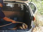 Tamanduá-mirim é capturado em residência de Alto Alegre dos Parecis