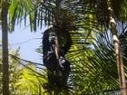 Amapá tem o único açaizal do mundo com certificado de manejo florestal