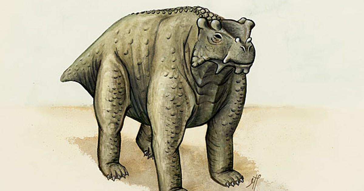 Animal de 260 milhões de anos foi primeiro quadrúpede não-rastejante