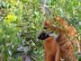 Lobo-guar� � tema de projeto sobre educa��o ambiental em Boituva