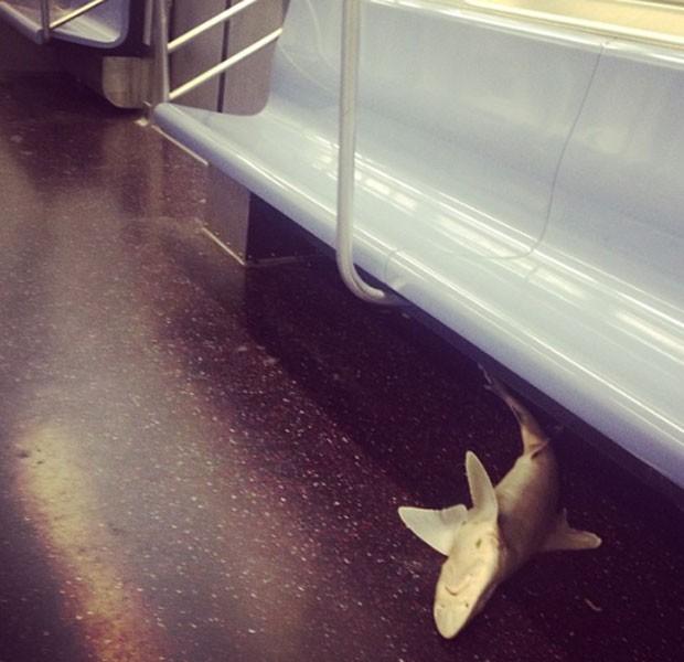 Passageiros do metrô de Nova York (EUA) foram surpreendidos na quarta-feira (7) depois que um tubarão morto foi encontrado debaixo de um banco (Foto: Reprodução/Instagram/Isvett Verde)