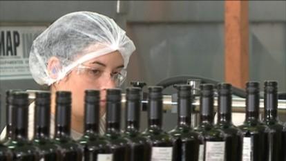 Evento discute demandas do setor vitivinícola em Bento Gonçalves, RS