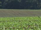 Dólar alto protege rentabilidade do produtor de soja, diz governo
