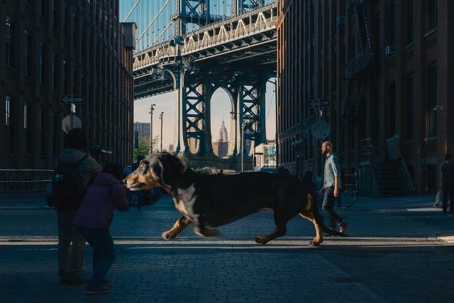 A dachshund Vivian (Foto: Mitch Boyer)