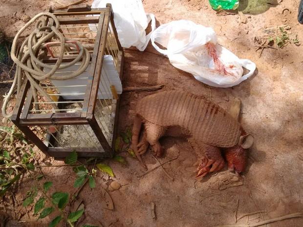 Tatu precisou ser descartado pelos militares devido ao mal estado de conservação (Foto: Polícia Militar/Divulgação)