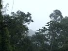 Buscas por avião desaparecido são retomadas em Paraty, RJ