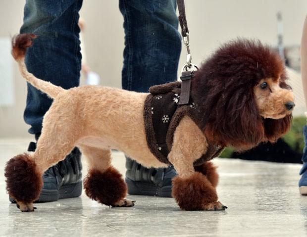 Loja de departamento Mitsukoshi promoveu encontro de cães com aparência de leões (Foto: Yoshikazu Tsuno/AFP)