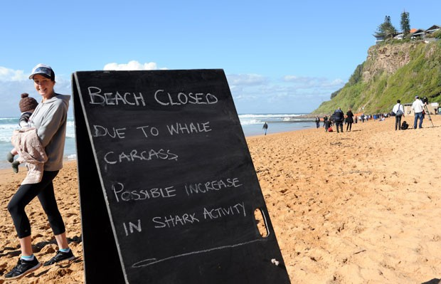 Placas foram colocadas pela praia explicando o motivo da interdição. (Foto: Torsten Blackwood/AFP)