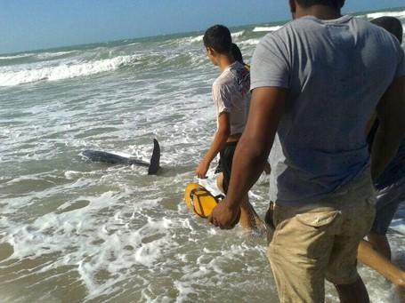 Filhote de baleia encalha em praia do Piauí (Foto: Divulgação / Proparnaiba)