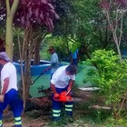 Árvores recebem trabalhos de manutenção
