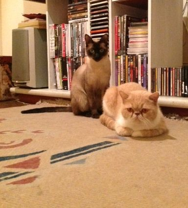 Os gatos de Adriano Garib (Foto: Arquivo pessoal)
