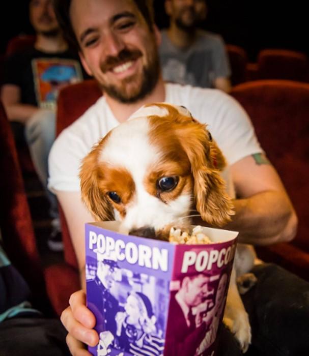 Cinema abre portas para cachorros (Foto: Instagram/Reprodução)