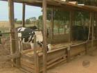 PM e agricultores discutem medidas para a onda de roubos em Leme, SP