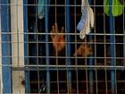 Para Mendes, mudança no regime de penas pode esbarrar na falta de vagas