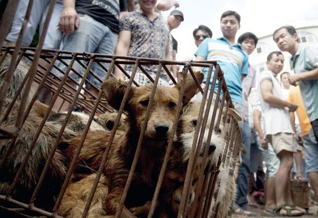 Cães eram vendidos no festival de carne de cachorro em Yulin, na China (Foto: Chinatopix via AP)