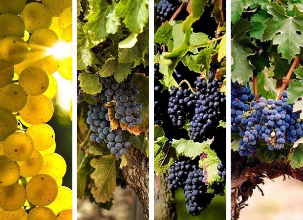 Conheça uvas que você nunca ouviu falar (Foto: Montagem/ Divulgação)