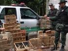 Polícia apreende 205 pássaros silvestres em feira de Arapiraca