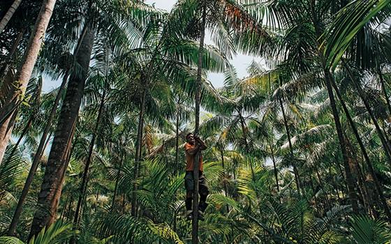 À SOMBRA DA FLORESTA   Luiz Antonio Correa Ferreira, catador de açaí. Sua atividade é mais vantajosa do que derrubar a mata para a pecuária (Foto: Filipe Redondo/ÉPOCA)