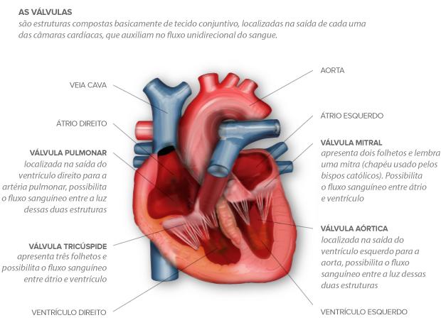 euatleta info componentes do coração (Foto: Editoria de Arte / EUATLETA.COM)