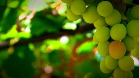Crescimento da venda de sucos de uva integral ajuda o setor