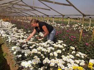 Mulheres estão ganhando destaque no cultivo e comercialização de flores (Foto: Divulgação)