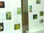Bom Dia Amazônia: no AP, exposição reúne 400 espécies de orquídeas