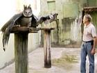 'Doutor harpia' cria aves silvestres para a reintrodução na natureza