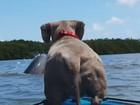 Cadela 'sem noção' salta de caiaque ao ver golfinho nos EUA