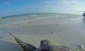Câmera em tartaruga alerta para fragilidade de vida marinha