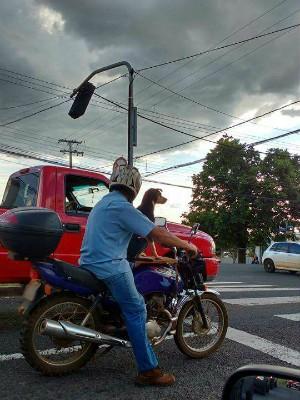Animal estava sendo transportado em uma motocicleta em avenida de Ponta Grossa (Foto: Danielli Sebastião/ Divulgação)