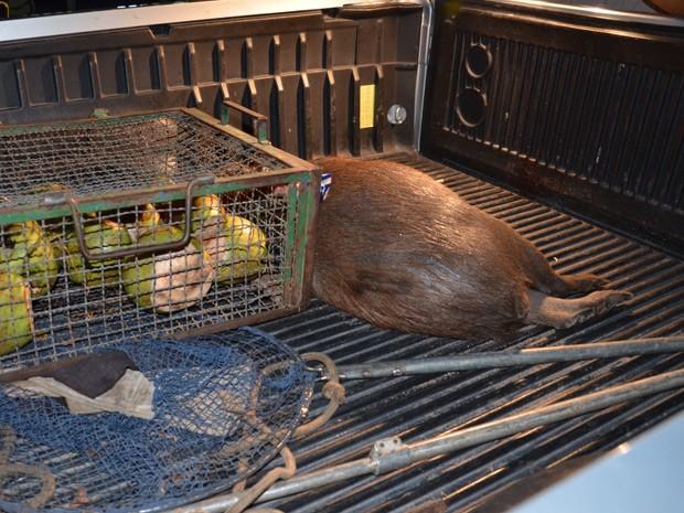 Polícia recebeu denúncias de que esse não foi o único animal a ser morto (Foto: Walter Paparazzo/G1)