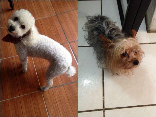 Cães foram resgatados após roubo de carro em Porto Alegre (Foto: Arquivo pessoal)