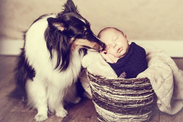 Planeta_bicho_fotografia_animais7 (Foto: Lidi Lopez)
