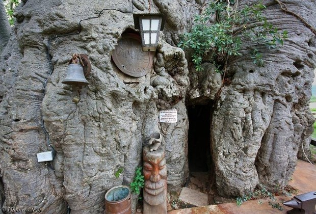 Baobab Tree Bar (Foto: Divulgação)